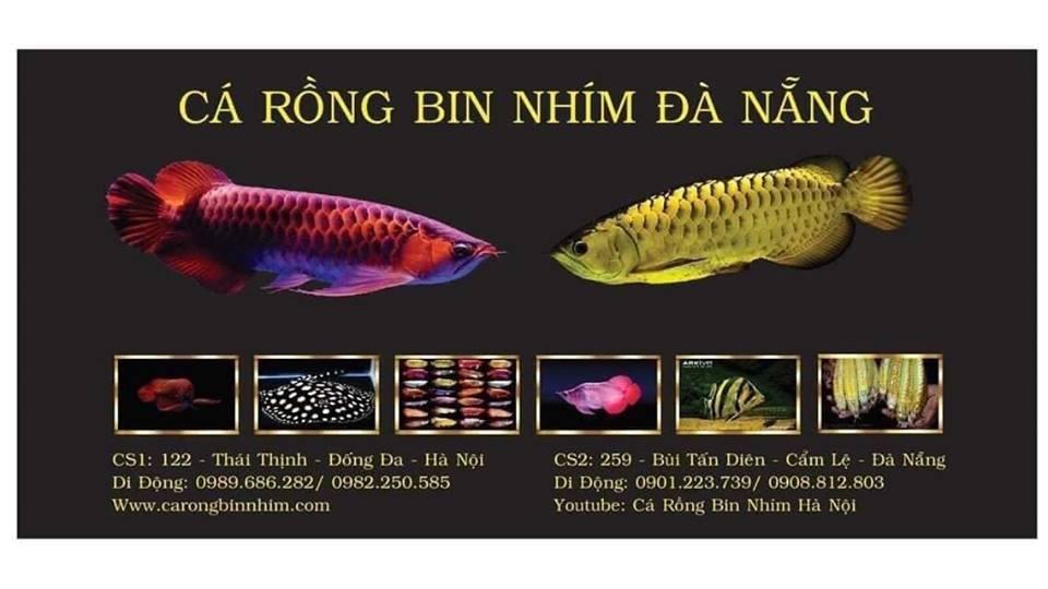 cá cảnh đà nẵng