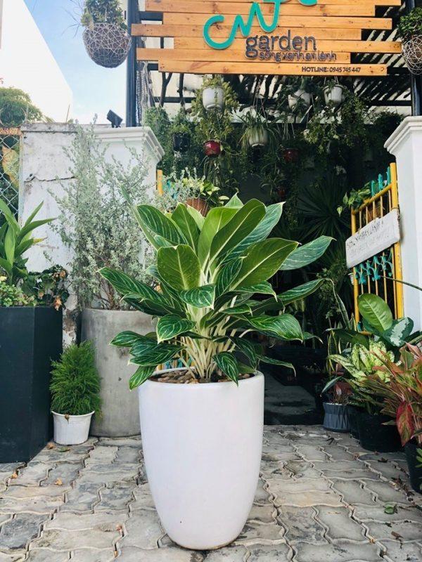 Một góc xinh xinh của CMT Garden Đà Nẵng