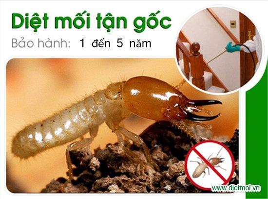 diệt côn trùng hn