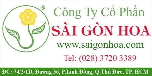 Công ty thiết kế cảnh quan sân vườn đẹp Sài Gòn Hoa